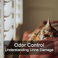 Pro-Care of Nashville understands urine damage and odor control and the affects a cat or dog can have on your floors, furniture and home.