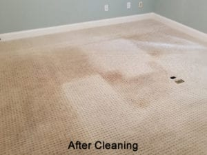 Even after a cleaning, traffic lane graying and abrasion dullness can cause the carpets to still appear dull.